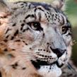 Billabong Zoo